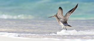 Bird - Mahé