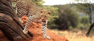 Namibie authentique