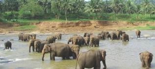 Sri Lanka Classique ****