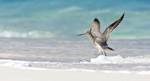 Bird Island Lodge : Activités / Loisirs