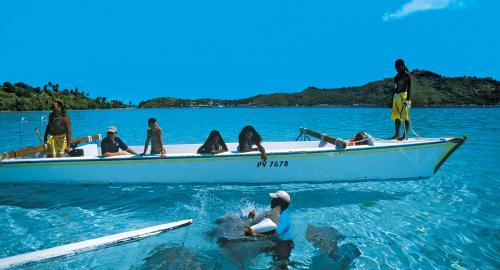 Raies et requins du lagon