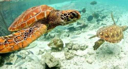 Le Méridien Bora Bora : Activités / Loisirs