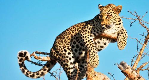 Namibie : La faune