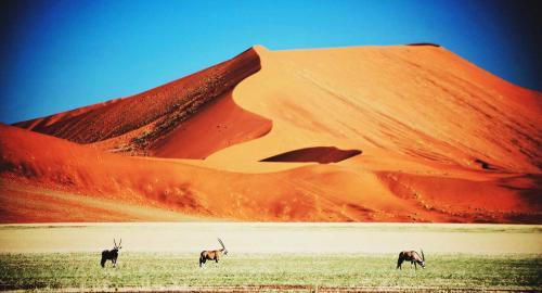 Namibie : Les déserts