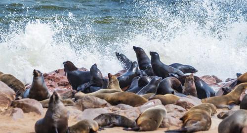 Kawak de mer à Walvis Bay