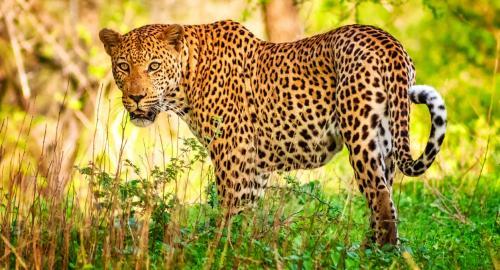 Afrique du Sud : Les parcs animaliers