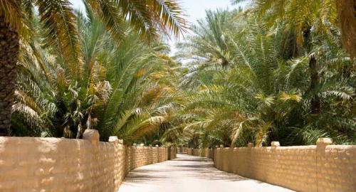 Oasis d'Al Ain