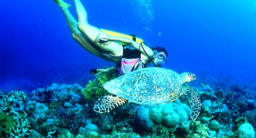 Bora Bora : La plongée
