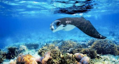 Maldives : La plongée