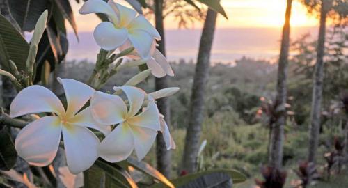 Huahine : Les fleurs