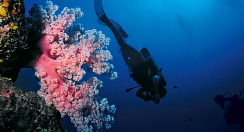 La Réunion : Plongée