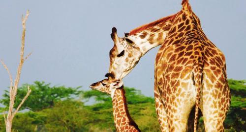Safari en Tanzanie Manyara/N'Gorongoro