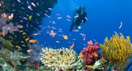 Zanzibar : La plongée